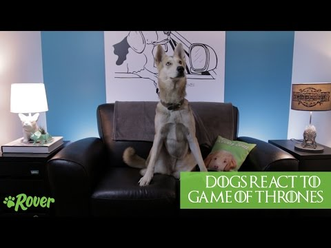 Dogs React to Game of Thrones (Seasons 1-5) - SPOILERS!!!