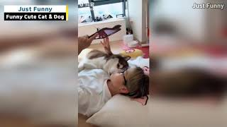 Funny Cats and Dogs Cute & Healing Video 2018 #2