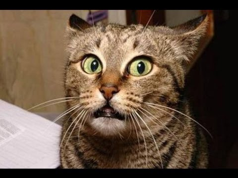 FUNNY VIDEOS: Funny Cats - Funny Cat Videos - Funny Animals - Cats Funny Videos 2014 #5