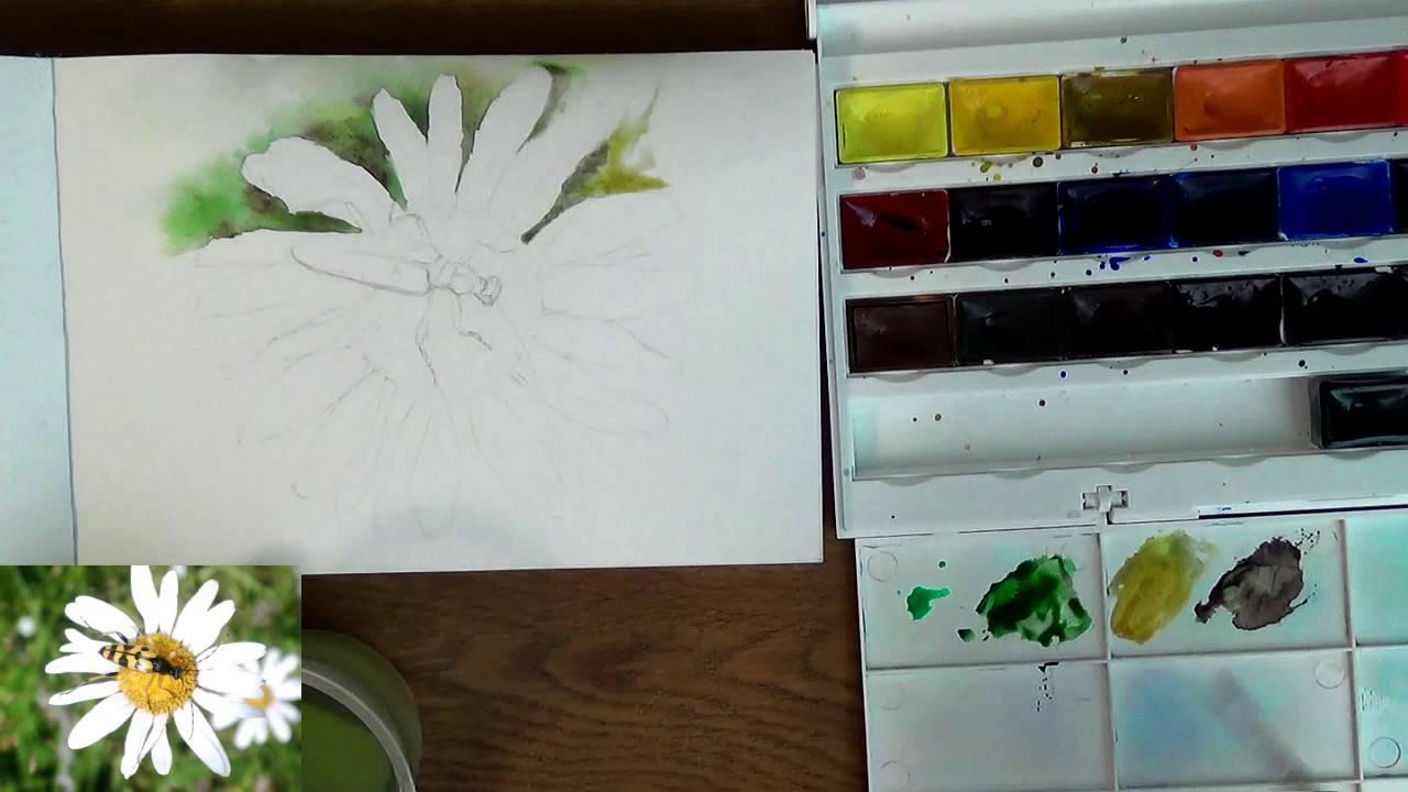 Мастер-класс по рисованию жука акварельными карандашами - YouTube
