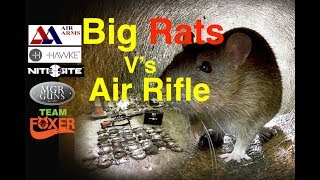 Air Rifle Ratting 139!!!! down in two hours.