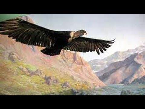 Paul Simon - El Condor Pasa