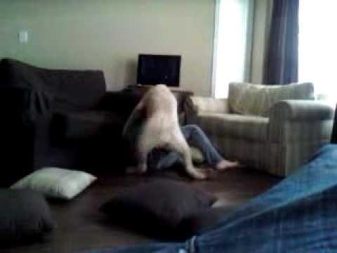 Girl Raped By A Huge Dog