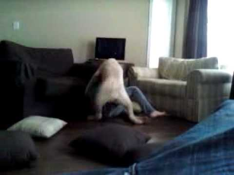 Girl Raped By A Huge Dog
