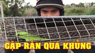 Kinh Dị Bẫy Dính Rắn Hổ Mang Khủng Nhất  3Kg (Clip1) #LeTuyenXinh | Serious snake
