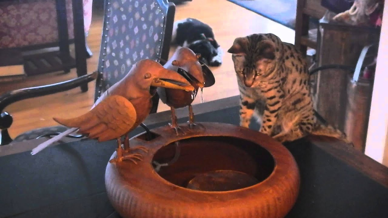 savannah cat with crow fountain
