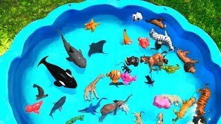 Lots of Zoo Wild Animals Learn Colors For Kids With Real Safari Videos