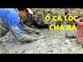Thụt hang bắt cá trúng ngay ổ cá lóc chà bá   Fishing   Sắc Màu VN thumbnail