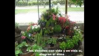 Vivero Jardín Plantas Lindas - Regalos vivos bien cultivados