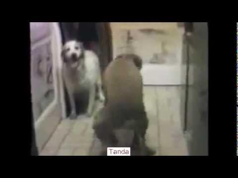 Baru - Hewan Lucu Sex - Animal Funny Video 2013un
