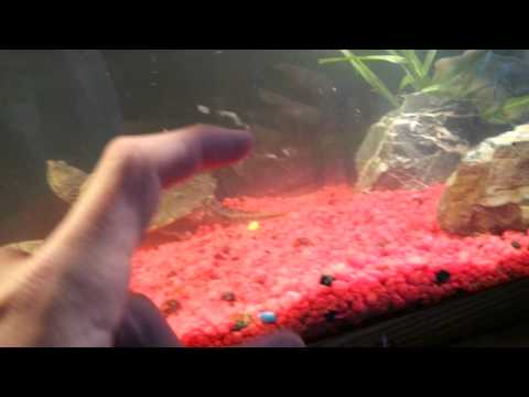 Turtle tank update #2