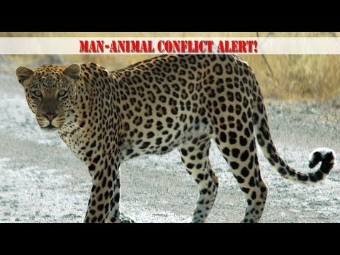 Meerut: Schools & Colleges close on account of roaming leopard