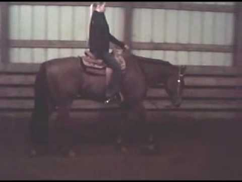AQHA GELDING FOR SALE *REGION EXPERIENCE WINNER* Video