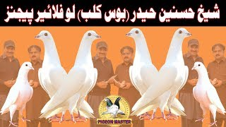 PIGEONS OF SHAIKH HASNAIN HAIDER ' BOSS CLUB ' READY FOR COMPETITION IN 2018