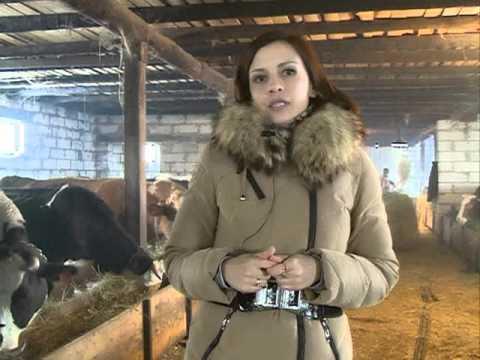 Семейные фермы Белогорья