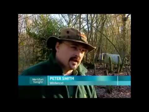 Bring Back British animals from Extinction