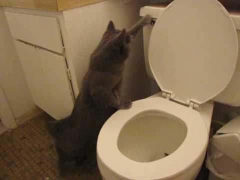 Teach Cat To Flush Toilet