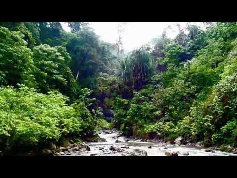 Ambient Jungle River, Gunung Leuser National Park, Sumatra