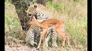 Những hình ảnh ấn tượng về động vật hoang dã.