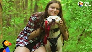 Blind Pit Bull Finds The Perfect Family To Guide Him Through Life | The Dodo