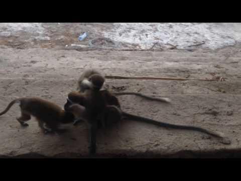 Monkeys Massage