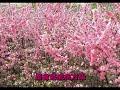 红梅赞   龚玥 Ode To The Red Plum Blossoms   Gong Yue