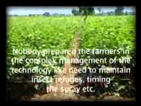 Bt Cotton adoption in Vidarbha -  A film by : Gene Campaign