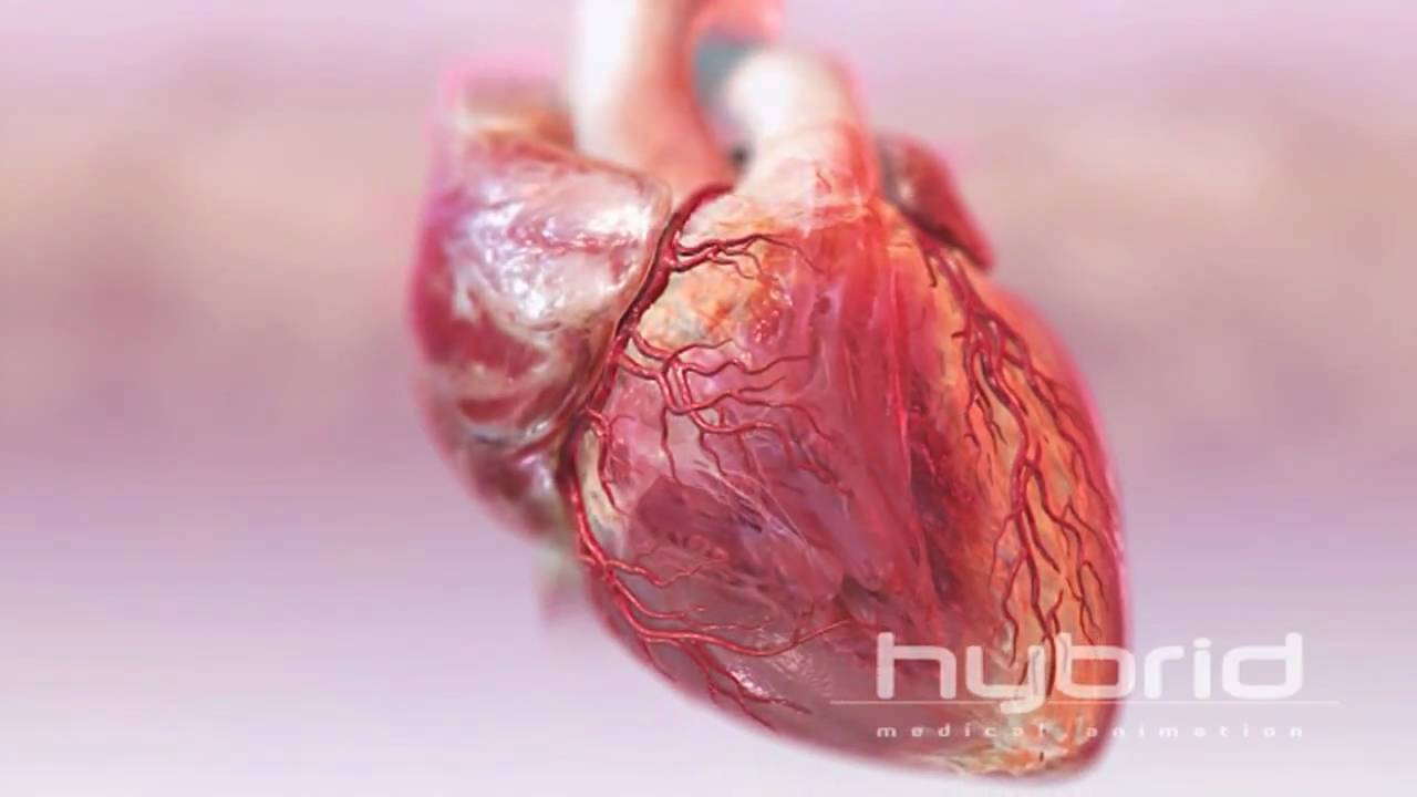 real human heart beating - photo #25