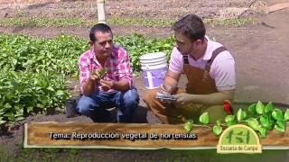 Escuela de Campo - Reproducción vegetal de hortensias - Mayo 9 de 2013