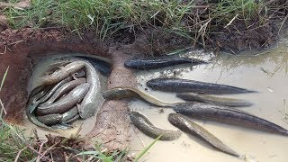 Smart Man Make Water Pipe Deep Hole Fish Trap To Catch A Lot Of Fish in Cambodia