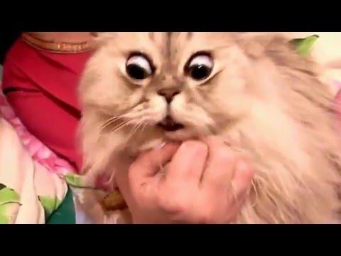 Que cara hace este gatito chistoso gracioso divertido risa reir tierno funny 2016 HD