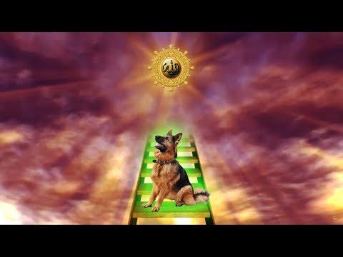 अल्लाह ने कुत्ते को क्यों पैदा किया Allah Ne Kutte Ko Kyun Paida Kiya