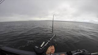 20161101 Blackmouth Salmon Fishing with Curt