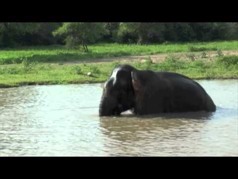Sri Lanka Safari Highlights