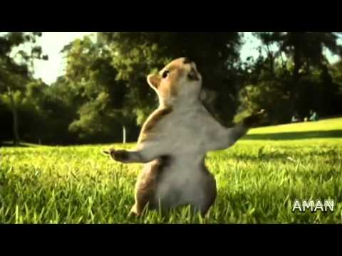 Kit Kat Squirrel Ad 2010 (india) Hd video