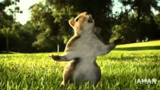 KIT KAT squirrel Ad 2010 (india) HD