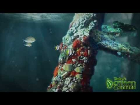 Recycle Oil Rig As Reef Habitat?