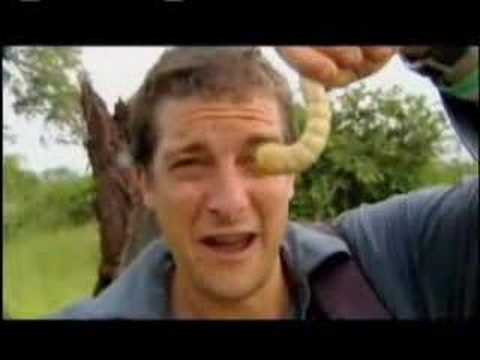 Man vs. Wild - Eating Giant Larva Video