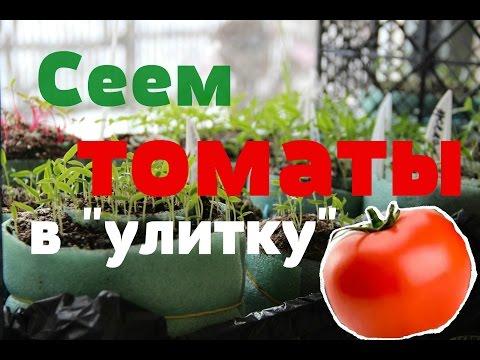"""Сеем томаты в """"улитку"""" . Рассада томатов. (22.02.2016)."""