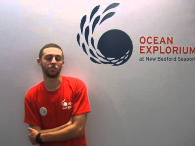 Interns Share Their Experience at the Ocean Explorium