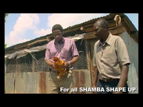 Shamba Shape Up - Maintaining Healthy Chickens Thumbnail