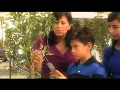 Million Trees LA: Plant Trees with your Family