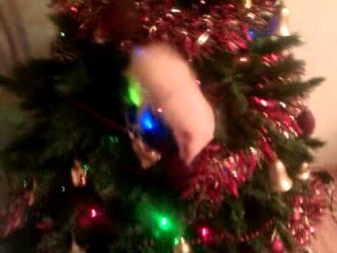 Ferret in the Christmas tree