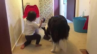 18Month baby feeding the dog