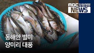 R)동해안 별미 양미리 대풍