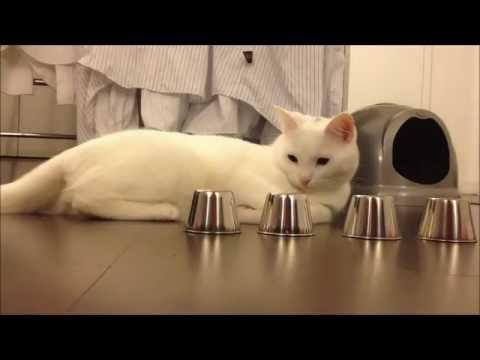 Game   Chú mèo thông minh   Chu meo thong minh