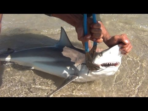 PINS Black Tip Shark Fishing, Loose Some, Land Some, A Peaceful Day