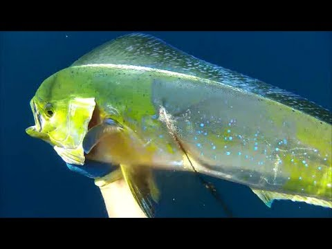 Dorado off San Diego, Paddy Hopping 2012