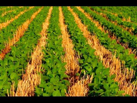 Выращивание сои по нулевой технологии 35