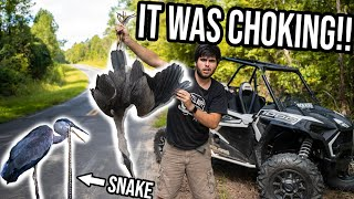 CRANE THROWS UP 3 FT. SNAKE!